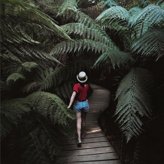 rain forest GOR