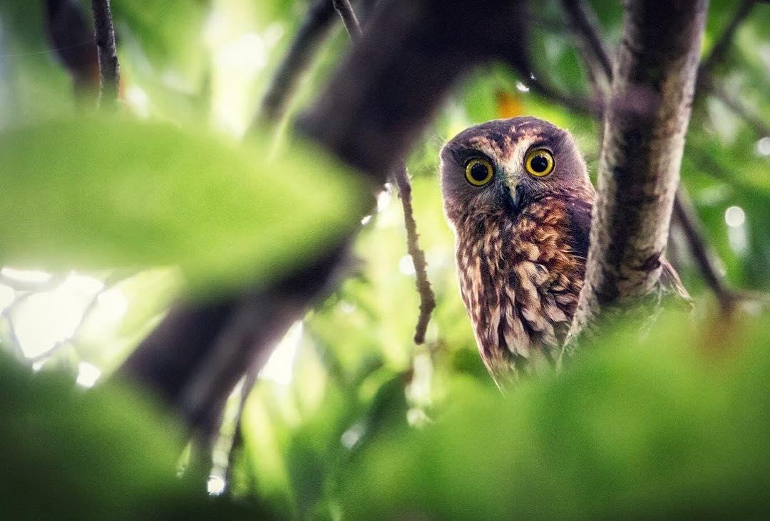 owl..jpg