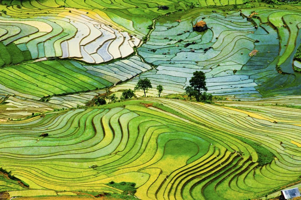 Terraced rice field in Vietnam.jpg